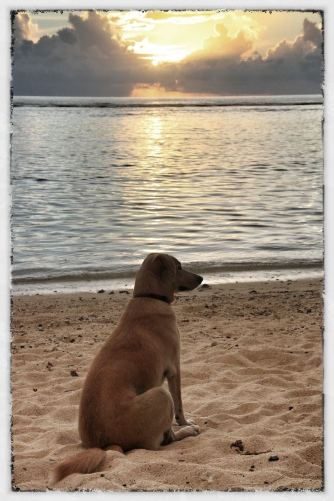 Coco at sunset